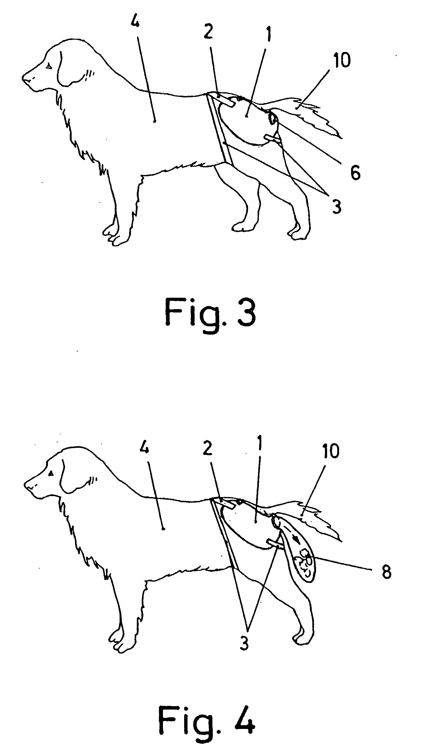 Dogs Mating Drawing