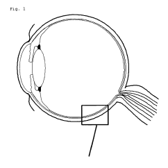 Canine Eye Diagram 06 Chevy Cobalt Radio Wiring Human Without Labels