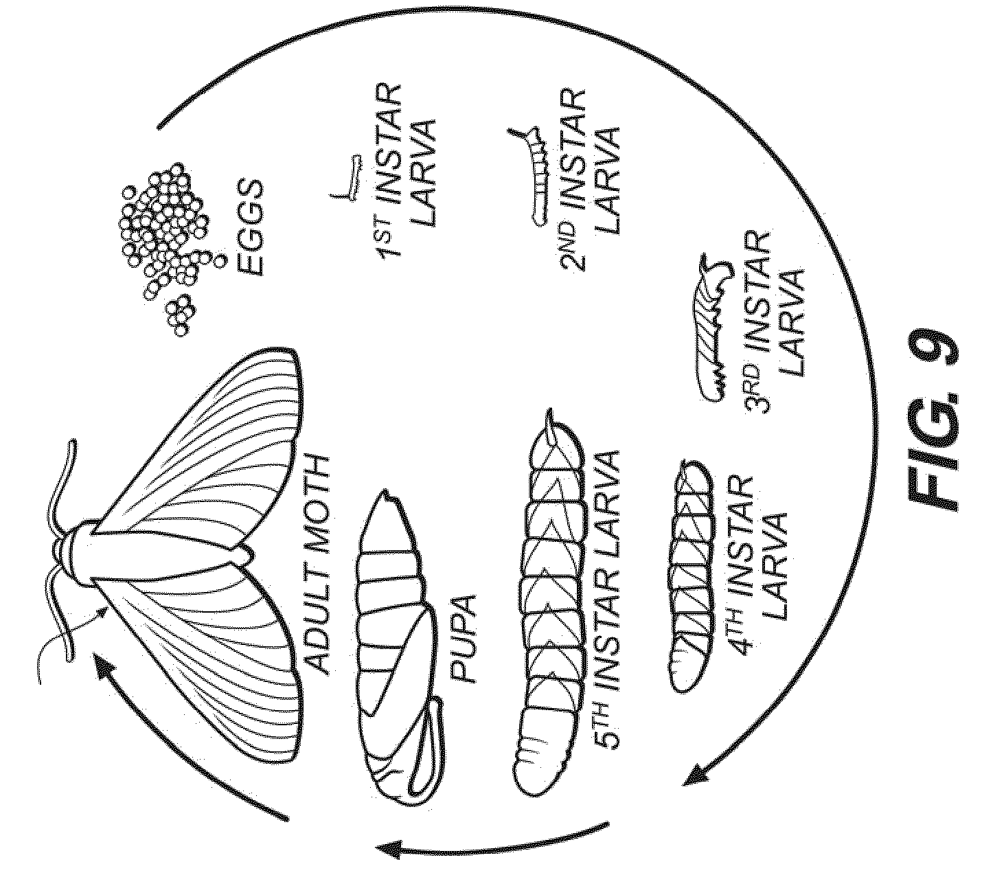 Butterfly Thorax Diagram