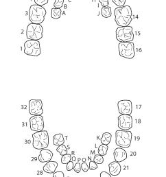 blank teeth diagram simple wiring schema teeth labeling worksheet blank teeth diagram [ 1553 x 2607 Pixel ]