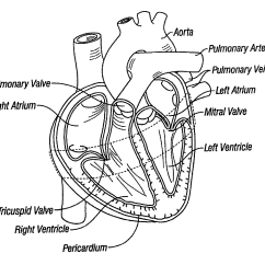 Unlabeled Heart Diagram Cross Section Labelled Of Agama Lizard Patent Us8092367 Method For External Stabilization