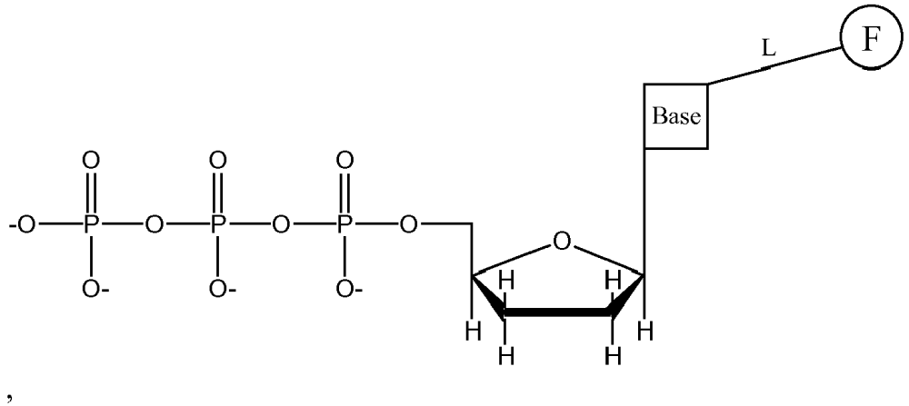 medium resolution of wherein f is a fluorophore l is a cleavable linker molecule and the base is adenine guanine cytosine uracil or thymine and wherein each base has a