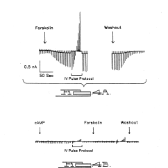 In Vivo Gene Therapy Diagram 12v Led Lights Wiring Patent Us5240846 Vector For Cystic Fibrosis