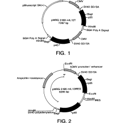 In Vivo Gene Therapy Diagram Whirlpool Dryer Buzzer Patent Us5922685 Il 12 Of Tumors Google