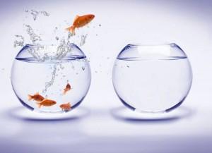 fish-choice