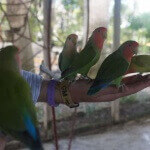 "Parakeets @ Ocean World (""tipo"" suggested, but they'll put food all over you anyway)"