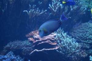 One of the aquariums at SeaWorld.