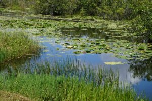 Anhinga trail, Everglades.