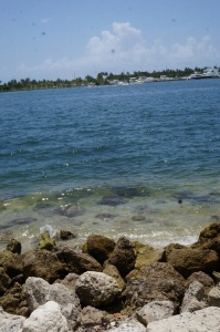 Beach at a picnic site in Oleta River Park, Miami