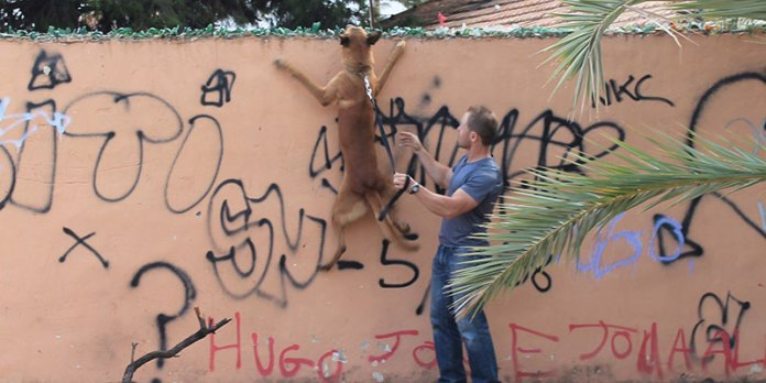: Imagen de Urko, integrante de la Unidad Canina de la Policía Local de Paterna