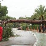Operarios municipales retiran un árbol caído en una de las principales vías de la Canyada