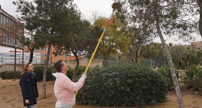 Nuria Campos visita los trabajos de tratamiento de pinos contra la procesionaria