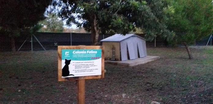 Imagen de la colonia felina