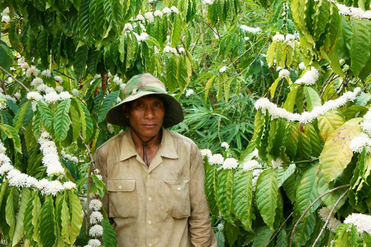 8asian-farmer-on-a-coffee-plantation-in-daklak-vietnam
