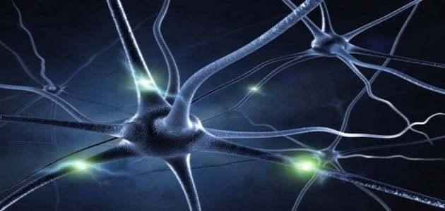 cerveau-neurones