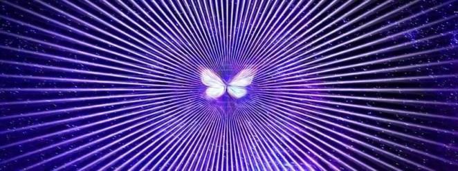 papillon lumineux3