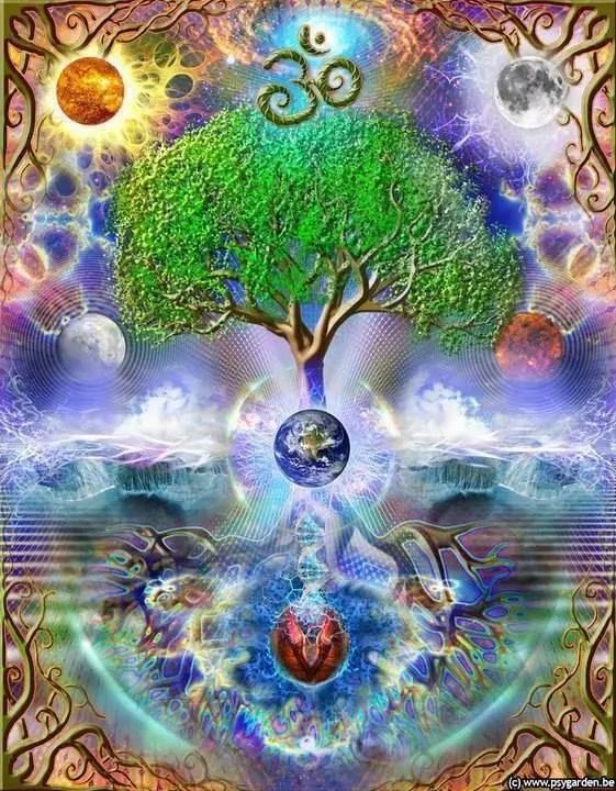 belle image arbre