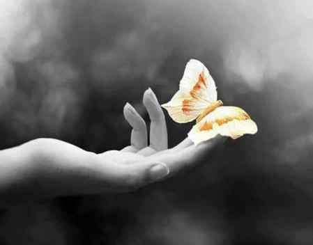 main papillon