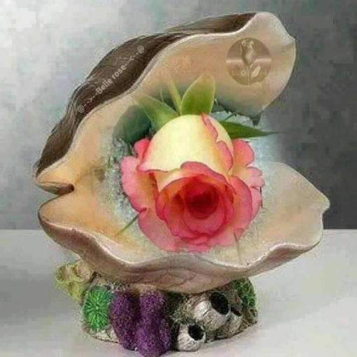rose dans coquille