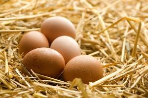 Combien manger d'œufs par jour ?