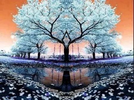 Omraam Mikhaël Aïvanhov et les arbres