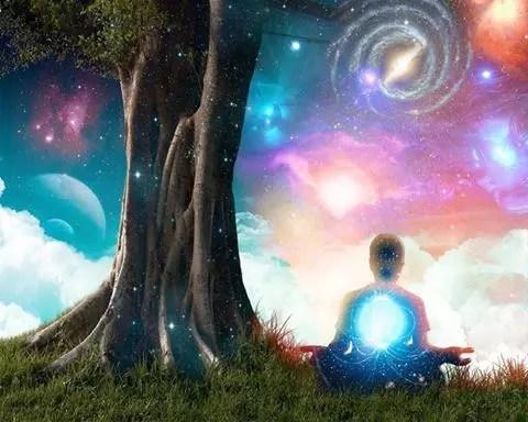 Méditer avec un arbre