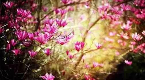 Astro Maya,le fleurissement,l'énergie vitale