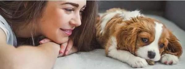 La rencontre entre soi-même et son animal