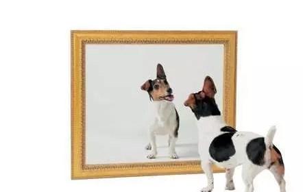 Le miroir des émotions