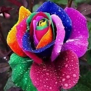 Méditation de la Fleur