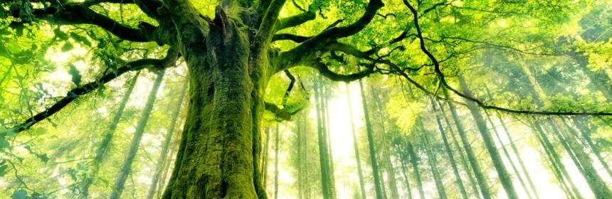arbre magnifique