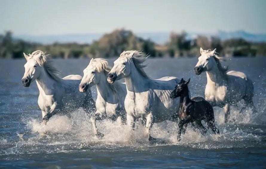 Animal totem le cheval : symbolisme