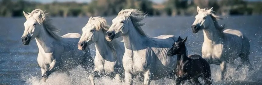 animal totem cheval