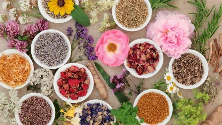 Des plantes contre 6 maux du quotidien