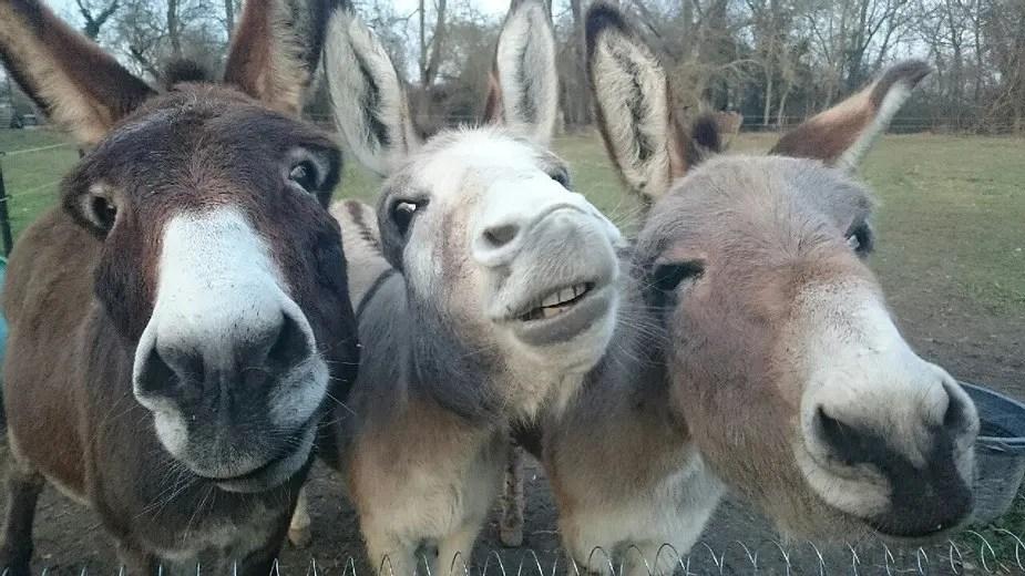 Animal totem l'âne : Symbolisme