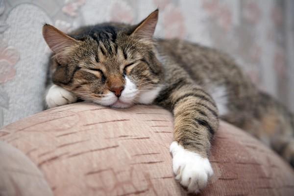 la vie des chats