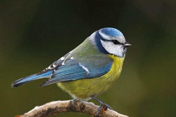 Comment soigner un oiseau blessé