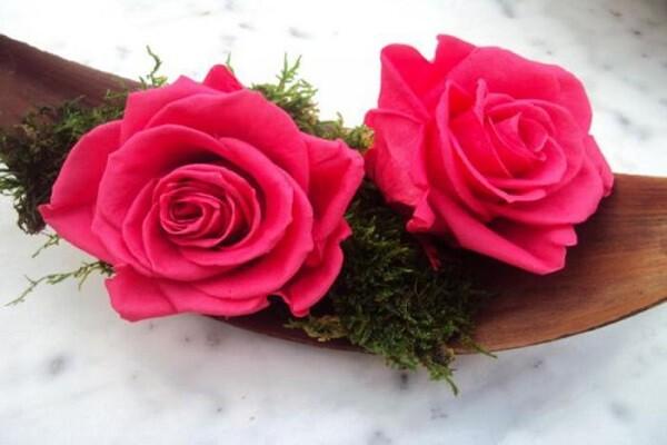 visualiser une rose