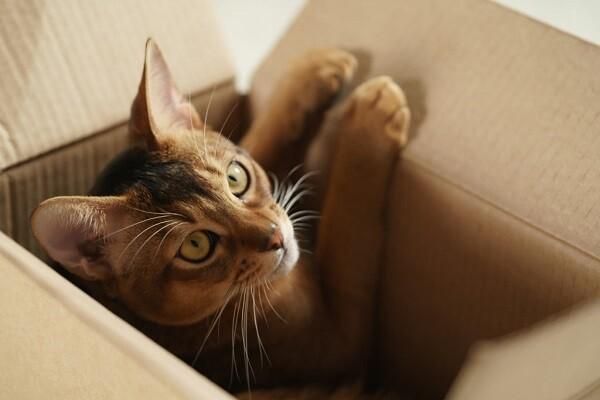 chat et carton