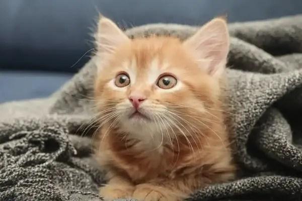 Choses à savoir avant d'adopter un chat