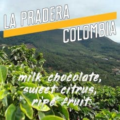 colombian coffee beans from la pradera