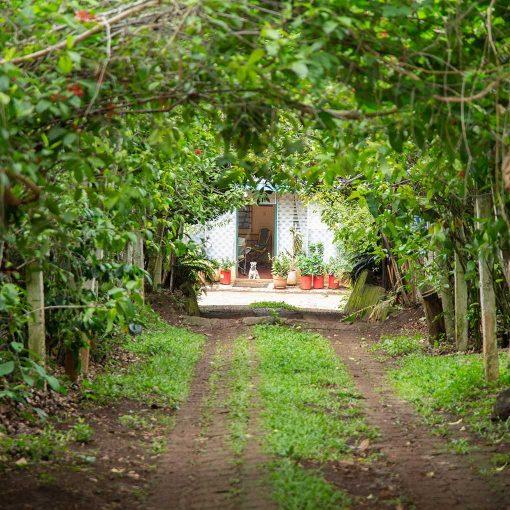 Monte Verde El Salvador 08