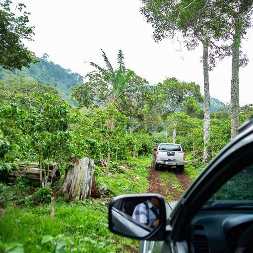 Monte Verde El Salvador 11