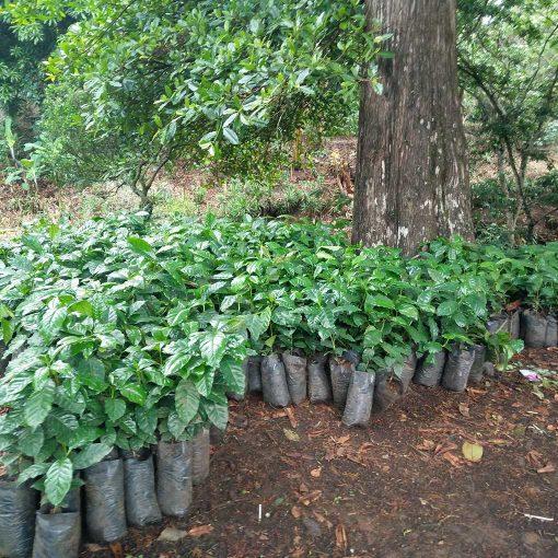 Monte Verde El Salvador 19