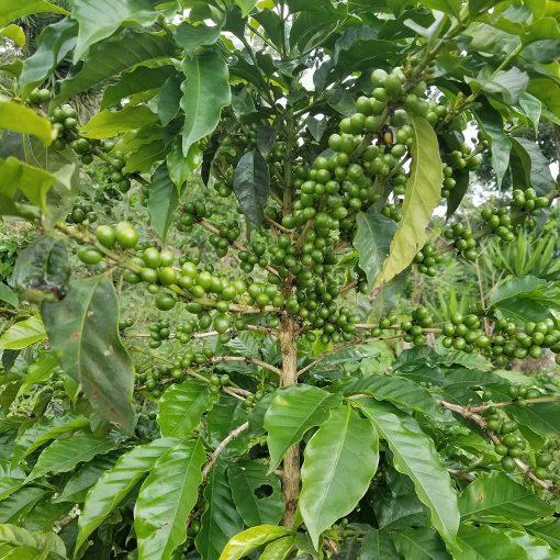 Monte Verde El Salvador 21