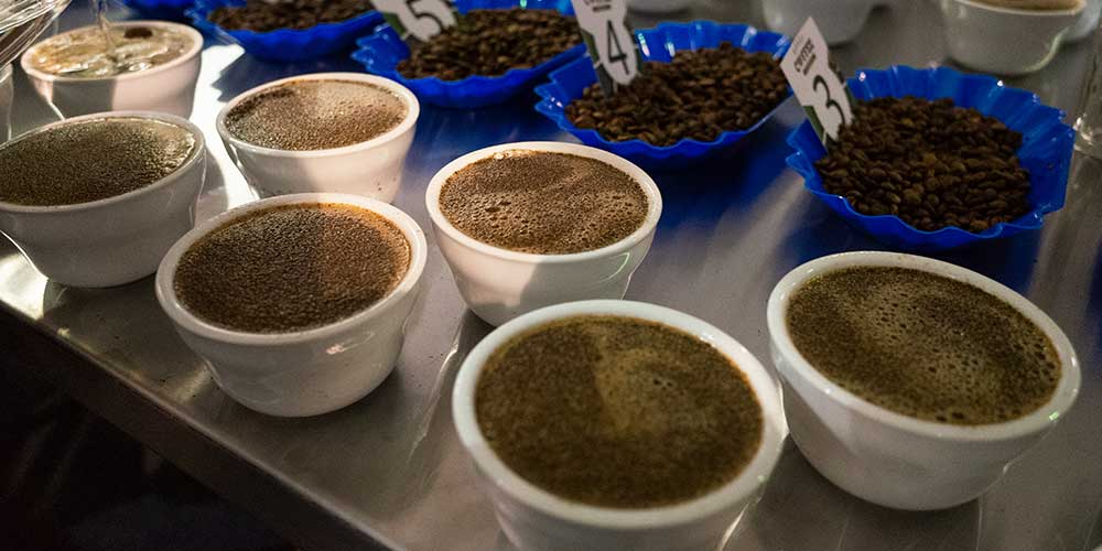 Getting ready to cup through the samples of the day. We did two rounds of sampling per day.