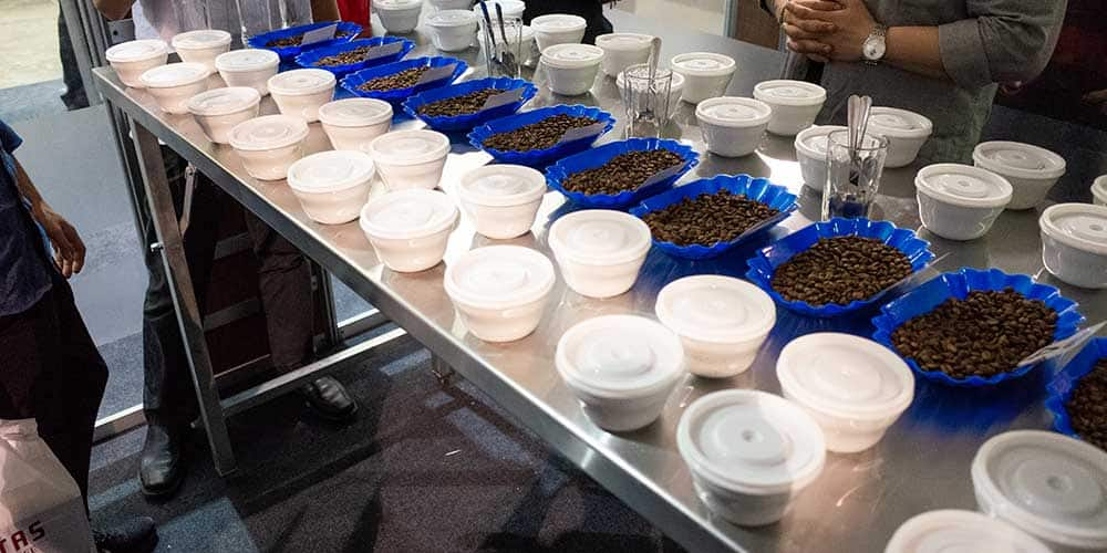We tasted over 40 different coffees Thursday and Friday.