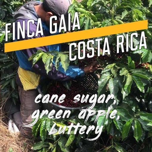 Costa Rica, Finca Gaia