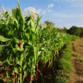 agricultural farm land for sale auction