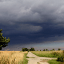 buy crop insurance Nebraska path finder